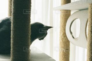 カメラを見ている猫の写真・画像素材[2337728]
