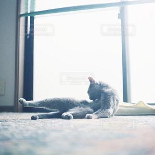 猫の写真・画像素材[2476348]