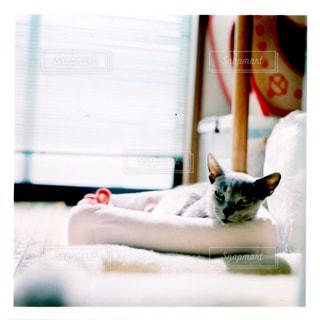 猫の写真・画像素材[2483574]