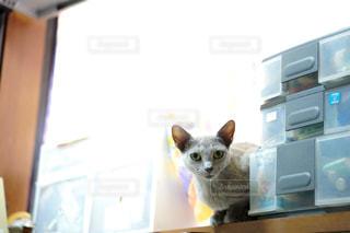 猫の写真・画像素材[2483600]