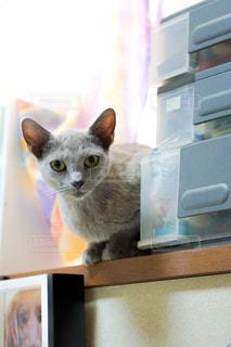 猫の写真・画像素材[2483622]