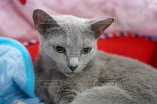 猫の写真・画像素材[2483637]