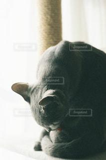 猫の写真・画像素材[2483644]
