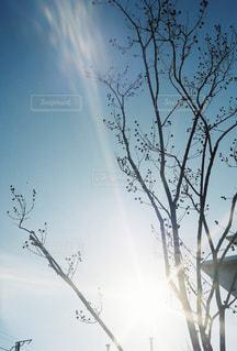 自然,空,冬,木,屋外,太陽,青空,枝,霧,光,樹木,草木,日中,クラウド