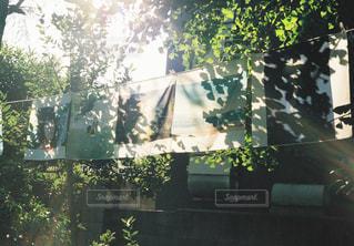 空,庭,屋外,太陽,窓,葉,影,シルエット,光,家,明るい,洗濯物,草木,日中