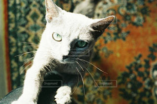猫のクローズアップの写真・画像素材[2957922]