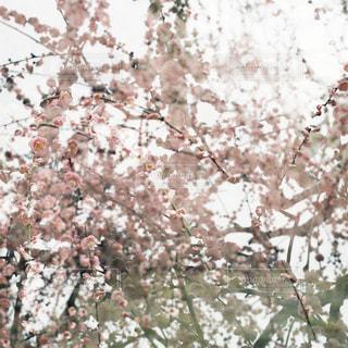 木のクローズアップの写真・画像素材[3047228]