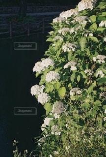 花園のクローズアップの写真・画像素材[3378631]