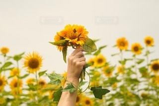 テーブルの上に花の花瓶の写真・画像素材[3530706]