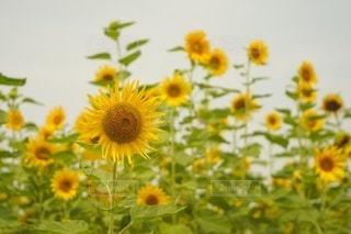花のクローズアップの写真・画像素材[3530708]