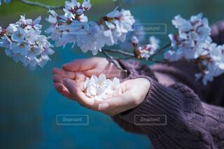 花を持つ手のクローズアップの写真・画像素材[4276914]