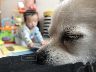 犬の写真・画像素材[242799]