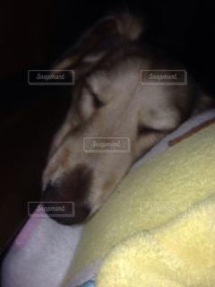犬の写真・画像素材[244903]