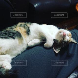 猫の写真・画像素材[241515]
