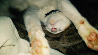 猫の写真・画像素材[241688]