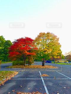 自然,秋,紅葉,北海道,樹木,苫小牧,秋の色,ノーザンホースパーク