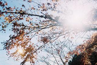 近くの木のアップの写真・画像素材[890065]
