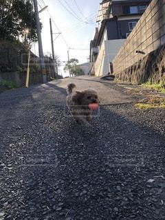 未舗装の道路上に犬の地位の写真・画像素材[1223541]