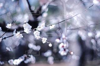 自然の写真・画像素材[1995470]