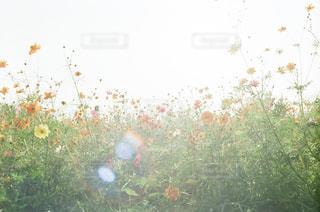 自然の写真・画像素材[2463415]