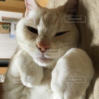 猫の写真・画像素材[20757]