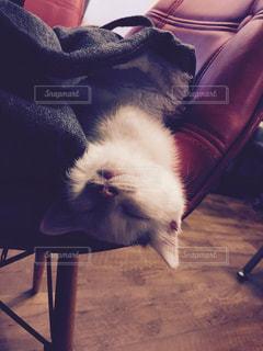 猫の写真・画像素材[244805]