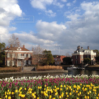 フィールド内の黄色の花の写真・画像素材[754063]