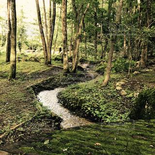 森林,緑,新緑,マイナスイオン