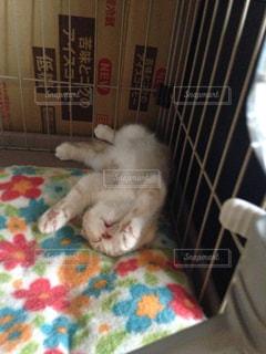 猫の写真・画像素材[239157]