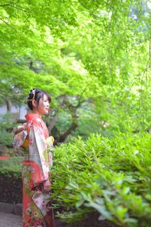 森林 - No.309173