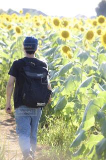草の中に立っている小さな男の子 - No.1122539