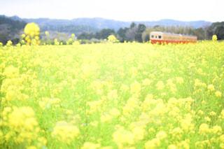 フィールド内の黄色の花 - No.1122548