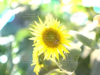 近くの花のアップ - No.1122549