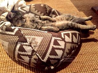 ベッドの上で横になっている猫の写真・画像素材[973514]