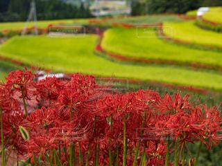 近くの花のアップの写真・画像素材[854055]