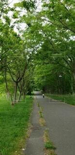自然,空,公園,春,屋外,道路,北海道,子供,草,樹木,新緑,兄弟,草木