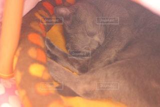 猫の写真・画像素材[239484]