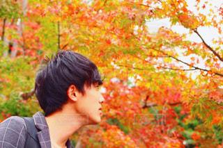 秋の写真・画像素材[657602]