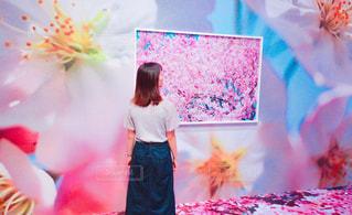 色とりどりの花のグループ - No.719752