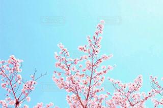 上に咲くの写真・画像素材[1837622]