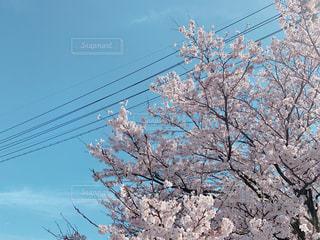 空の写真・画像素材[2060514]