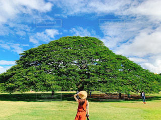 背景にモアナルア・庭園がある緑の野原にいる人の写真・画像素材[2130003]