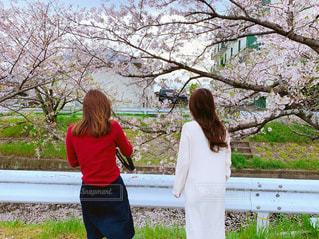 花,春,桜,屋外,後ろ姿,女の子,人物,背中,人,大人,ロングヘアー,休日,友達