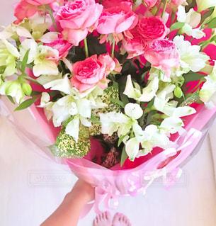 花の写真・画像素材[476789]