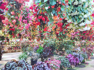 花の写真・画像素材[493473]