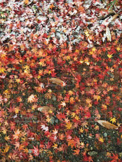 里の秋の写真・画像素材[877734]