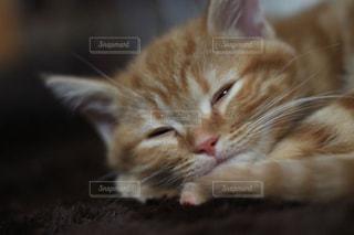 猫の写真・画像素材[239097]