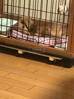 犬の写真・画像素材[239288]