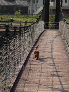 犬の写真・画像素材[452981]