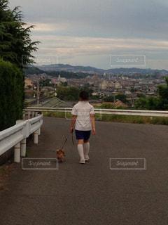 犬の写真・画像素材[452984]